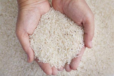 شپشک برنج,شپشک برنج چیست,روش های جلوگیری شپشک برنج شپشک برنج چیست و چگونه می توان آنها را از بین برد؟,شپش,rice weevils eliminated,جلوگیری از شپشک برنج,مقابله با شپشک برنج,