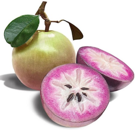 سیب ستاره ای Chrysophyllum cainito Apple Star,ارزش غذایی سیب ستاره ای, درخت سیب ستاره ای, سیب ستاره ای سفید ,سیب ستاره ای:چگونه آن را بخوریم و چه خواصی دارد؟,سیب ستاره ای,خواص سیب ستاره ای,star apple properties,Star Apple,Chrysophyllum cainito,